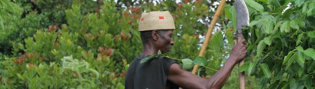 Poivres sauvages de Madagascar
